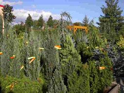 Entstehung des Pflanzenzentrums